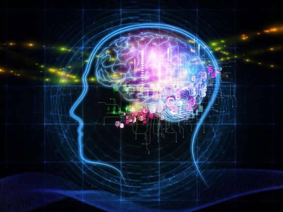 Cervello sviluppo
