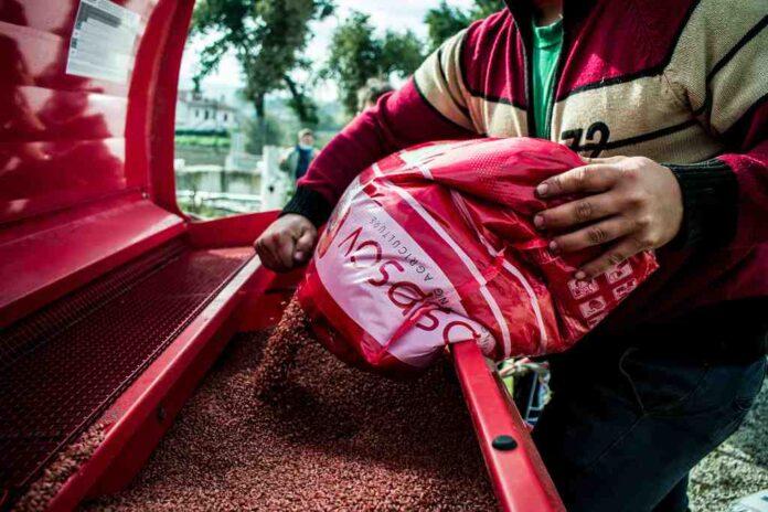 Nasce la filiera per la farina 100% Irpina. Prima semina a Grottaminarda